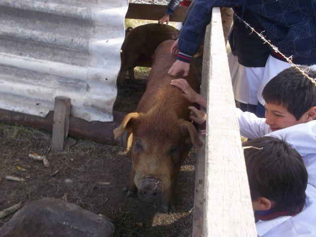 CEIMER Alumnos con cerdos