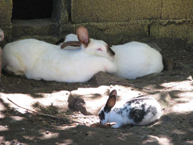 Canelones CER Conejos