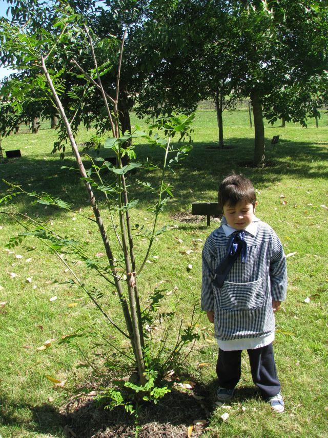 Escuela 34 Niñito y árbol