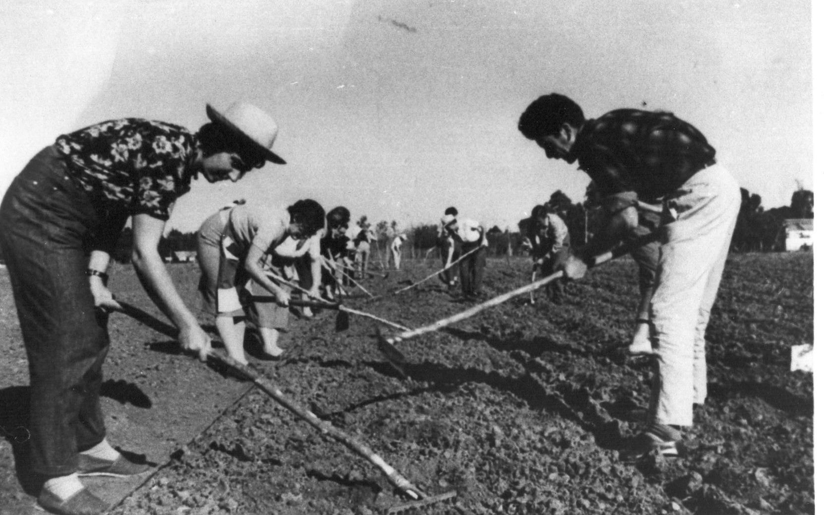 I.N.R. Becarios trabajando en la huerta
