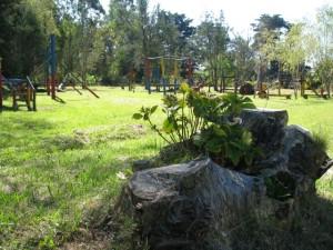 Rocha Juegos y tronco con planta