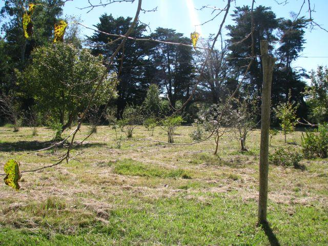 Rocha Monte de árboles nativos