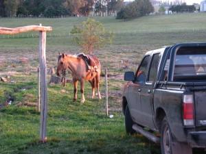 caballo camioneta